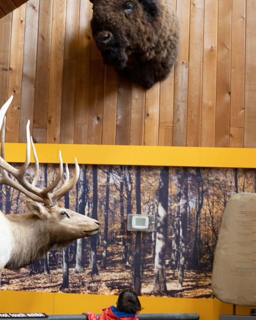 Image of toddler boy standing next to a taxidermy elk.